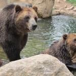 colorado springs cheyenne mountain zoo bears