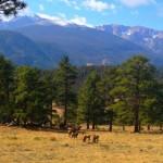 winter park elk and wildlife